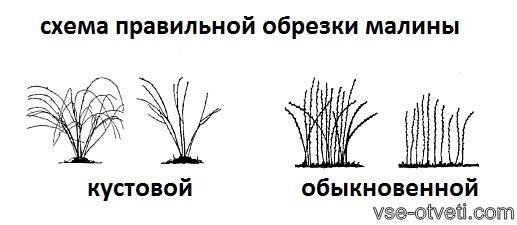 обрезка малины_obrezka malini